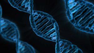 DNA 組織