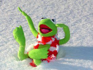 冬のカエル
