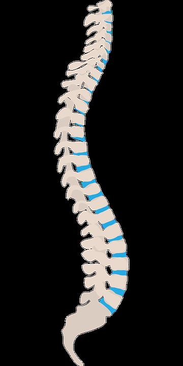 正常な背骨