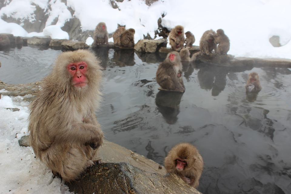 高温反復浴で基礎代謝量を上げる