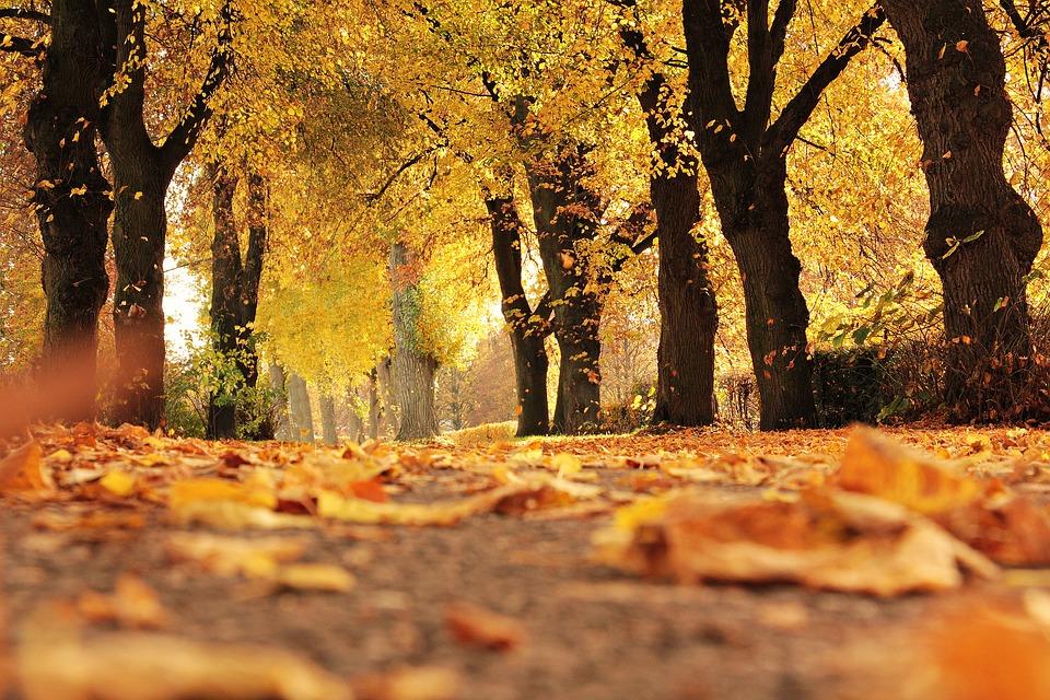 秋が苦手な人でもシェイプアップを成功させる「6つの秘訣」